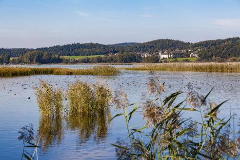 Germany, Reichenau, Wollmatinger Ried - WD04633