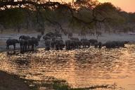 Africa, Namibia, Bwabwata National Park, Kwando Core Area, Horseshoe, Kwando river, herd of elephants in the evening, Loxodonta africana - ESF01633