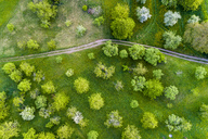 Germany, Baden-Wuerttemberg, Swabian Franconian forest, Rems-Murr-Kreis, Aerial view of meadow with scattered fruit trees and dirt road - STSF01520