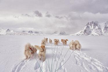 greenland, Schweizerland Alps, huskies - ALRF01206