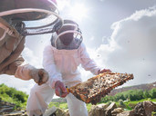 Beekeepers inspect honey comb - CUF00956