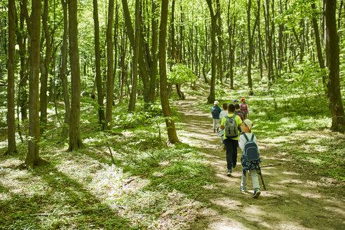 Kids on a field trip in forest - ZEDF01402