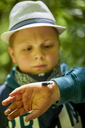 Boy examining beetle on his hand - ZEDF01408