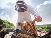 Beekeeper inspects bee hive - CUF01841