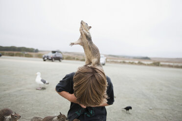 Squirrel standing on a boy's head - ISF00740