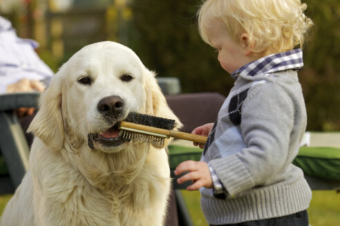Little boy letting golden retriever chew a brush - ISF00839