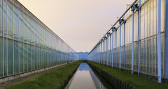 Greenhouses at dusk, in Westland, area with the highest concentration of greenhouses in Netherlands - CUF02325