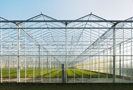 Greenhouse in Westland,  area with the highest concentration of greenhouses in Netherlands - CUF02331