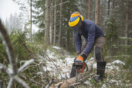 Logger sawing tree, Tammela, Forssa, Finland - CUF04657