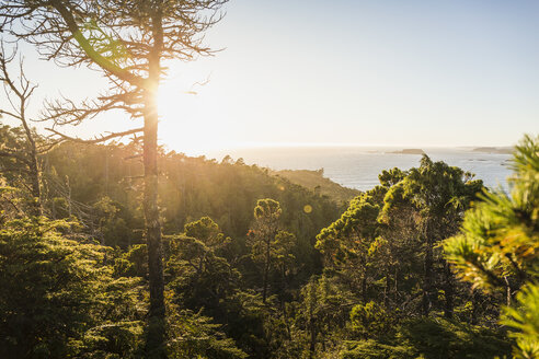 Elevated view of coastal forest, Pacific Rim National Park, Vancouver Island, British Columbia, Canada - CUF06215