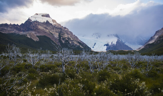 Dead trees on the way to Mt Fitz Roy, El Chalten, Santa Cruz province, Argentina - CUF06239