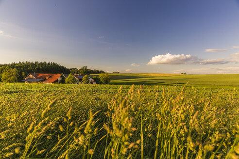 Austria, Innviertel, field - AIF00480