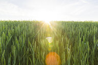 Austria, Innviertel, field against the sun - AIF00486