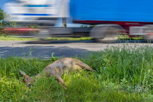 Germany, dead deer at roadside ditch - FRF00661
