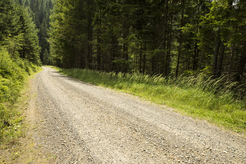 Austria, Styria, empty forest track - AIF00499