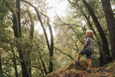 Boy in forest looking over shoulder at camera, Fairfax, California, USA, North America - CUF07269