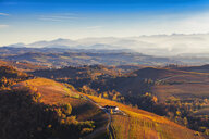 View from hot air balloon of rolling landscape and autumn vineyards, Langhe, Piedmont, Italy - CUF07571