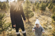Mother and baby girl in Christmas tree farm, Cobourg, Ontario, Canada - ISF01827
