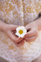Cropped view of girl holding daisy flower - ISF01911