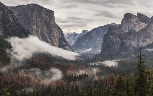 Elevated view of valley forest mist, Yosemite National Park, California, USA - CUF07996