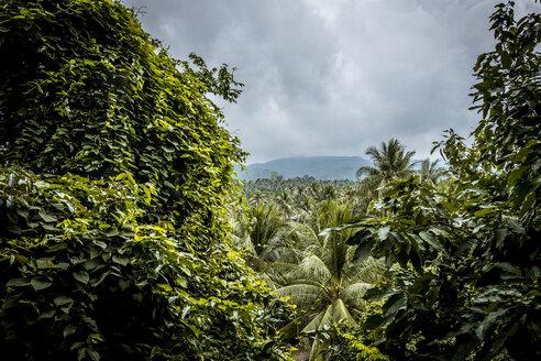 Thailand, Koh Phangan, landscape at stormy atmosphere - MMIF00065