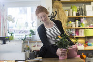 Florist working with potted plants in shop - CUF09039