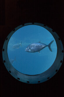 A group of fish swimming past a porthole, Durban, South Africa - CUF09504