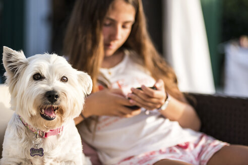 Portrait of cute white dog and teenage girl looking at her smartphone on patio chair - CUF10040