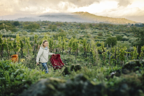 Woman carrying crate in vineyard - CUF12018