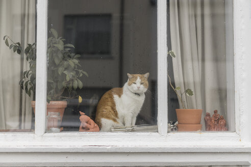 Cat sitting behind window of a residential house - AFVF00489