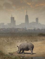 Black rhino grazing, Nairobi National Park, Nairobi, Kenya, Africa - ISF03247