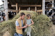 Father and daughter beside cow shed, daughter holding hay - ISF03769