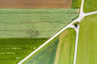 Germany, Baden-Wuerttemberg, Schurwald, Aerial view of fields in spring - STSF01573
