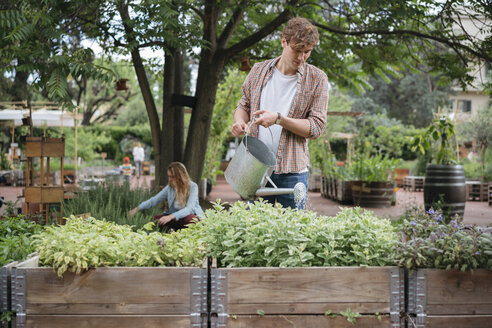 Young man and woman in urban garden, young man watering plants in trough using watering can - ISF04541