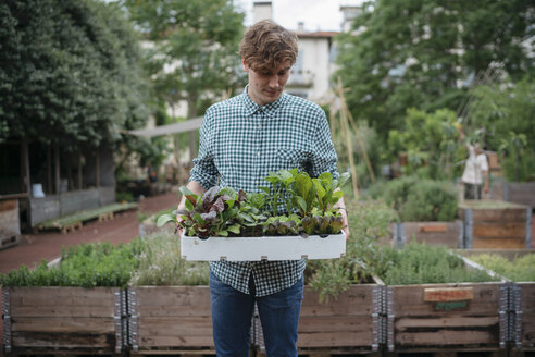 Man in garden holding tray of plants - ISF04553