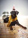 Dog wearing santa hat on head - ISF04646