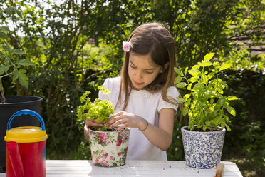 Little girl potting parsley on table in the garden - LVF06993