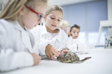 Pupils in science class examining snake - WESTF24236