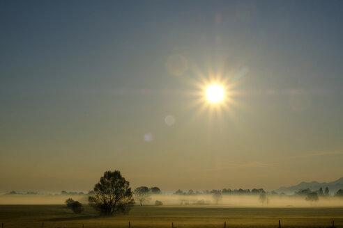 Germany, Bavaria, Upper Bavaria, Bad Feilnbach, morning fog over moor - LBF01937
