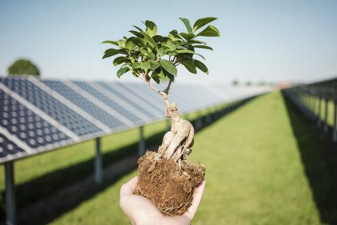 Male hand holding privet, solar plant - MOEF01119