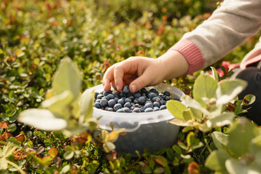 Young girl taking blueberry from bowl, close-up - CUF14227