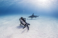 Diver taking photograph of Great Hammerhead Shark - CUF17514