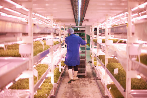 Full length rear view of worker pushing trolley through artificial light growing room - CUF18052