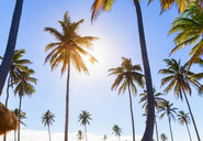 Sunlit palm trees at coast, Dominican Republic, The Caribbean - CUF19749