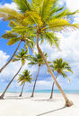 Palm trees leaning toward each other on beach, Dominican Republic, The Caribbean - CUF19752