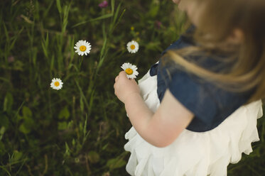 Over shoulder view of girl picking daisy flowers - CUF20149