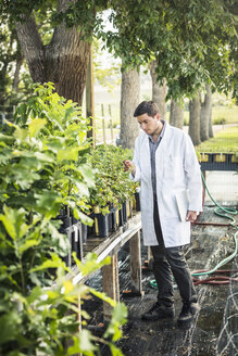 Scientist carrying laptop examining plants at plant growth research facility - CUF20258