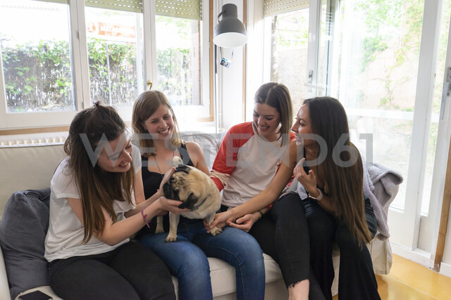 Four friends sitting with pug on the couch at home - AFVF00610