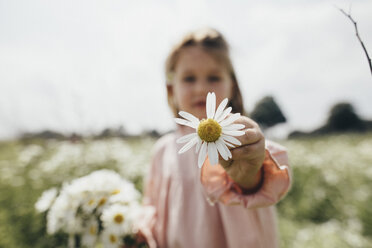 Little girl holding picked chamomile, close-up - KMKF00268