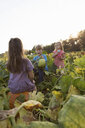 Three young children in pumpkin patch, choosing pumpkins - ISF08326
